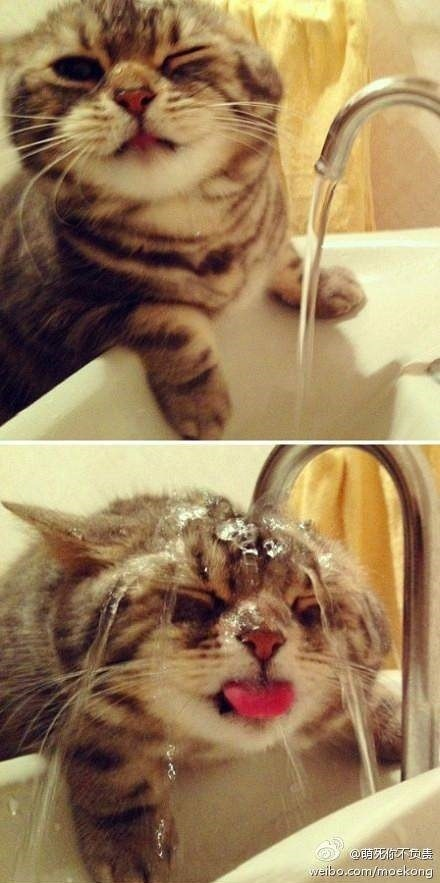 When-even-cats-feel-the-Heat-XD